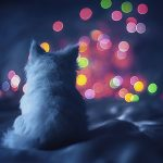 kerst achtergrond poes bokeh