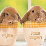 fijne paasdagen konijn
